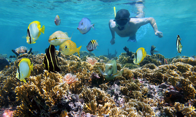CocoCay All Day Snorkeling at your Leisure