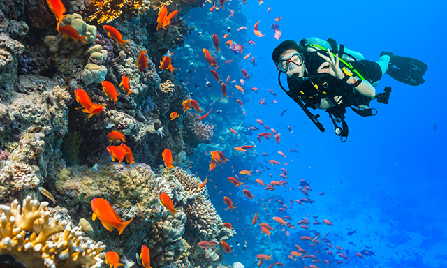 Discover Scuba Diving Nassau